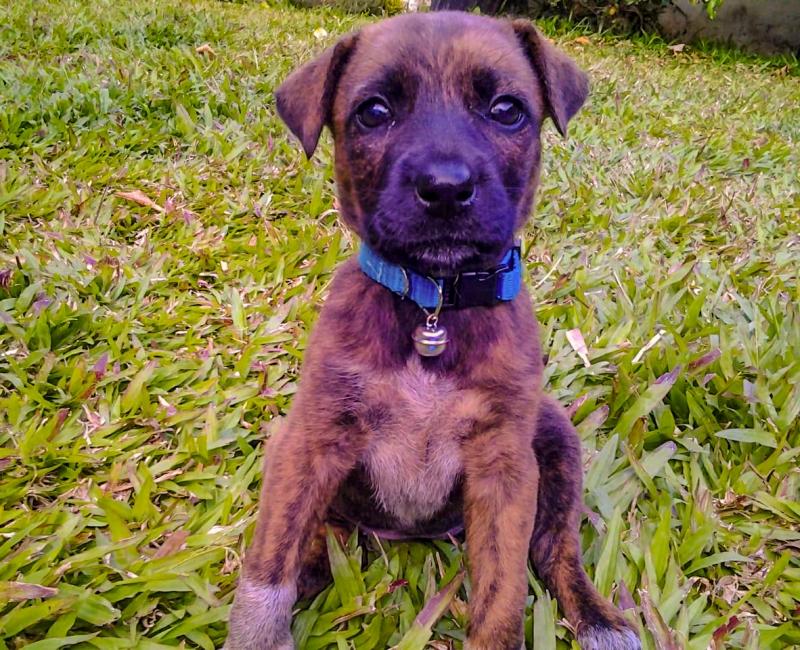 pecana_puppy